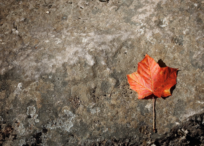 Red leaf on rock