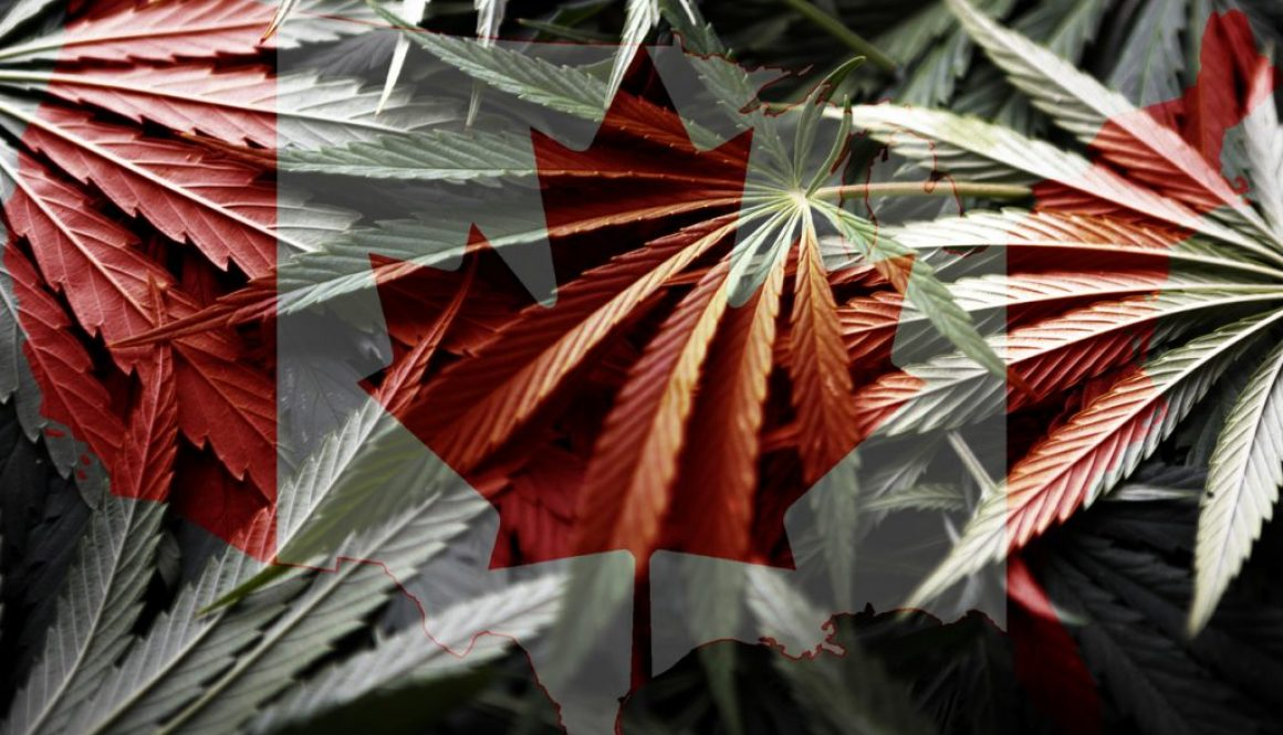 Canada Flag on cannabis background ,legalization of marijuana
