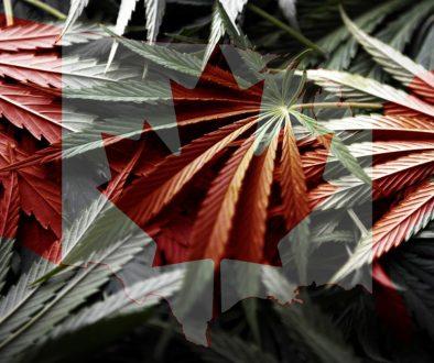 Canada Flag on cannabis background ,legalization of marijuana